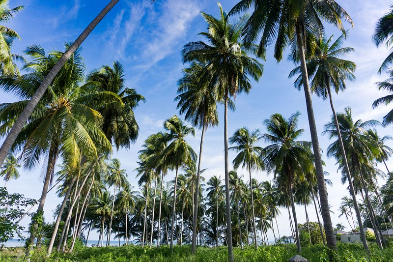Local area idyllically covered in Palm trees
