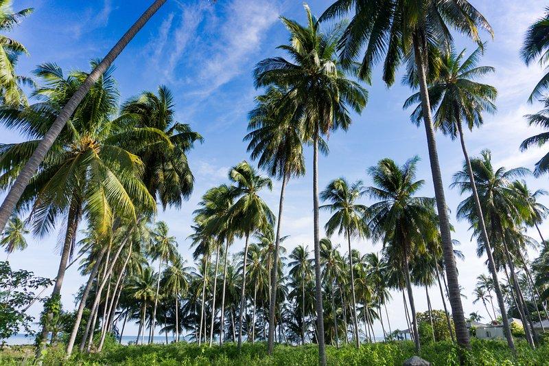 Isla idílicamente cubierta de palmeras