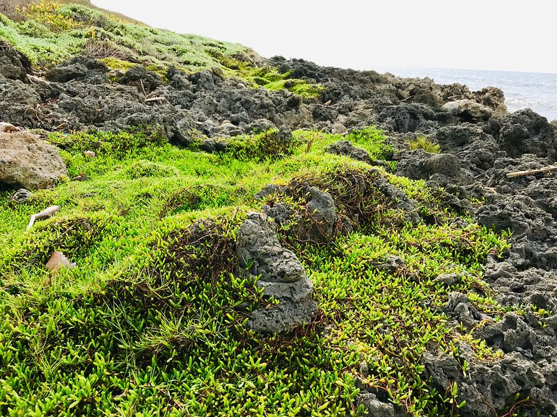 Volcanic rocks near beach