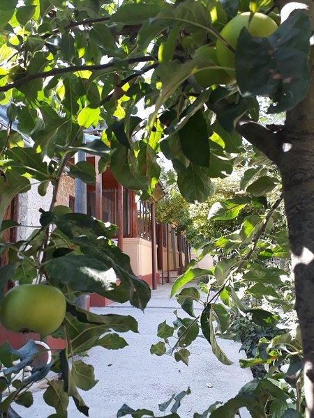 Igor house Jurilovca, holiday rental in Tulcea County