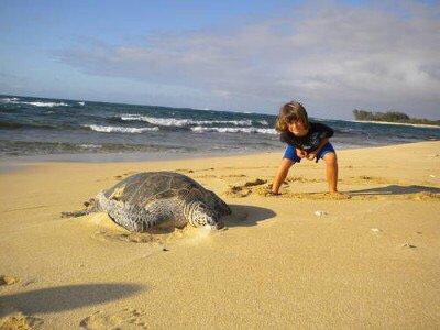 parfois on voit des tortues sur la plage.