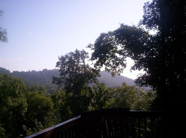 Bearadise View