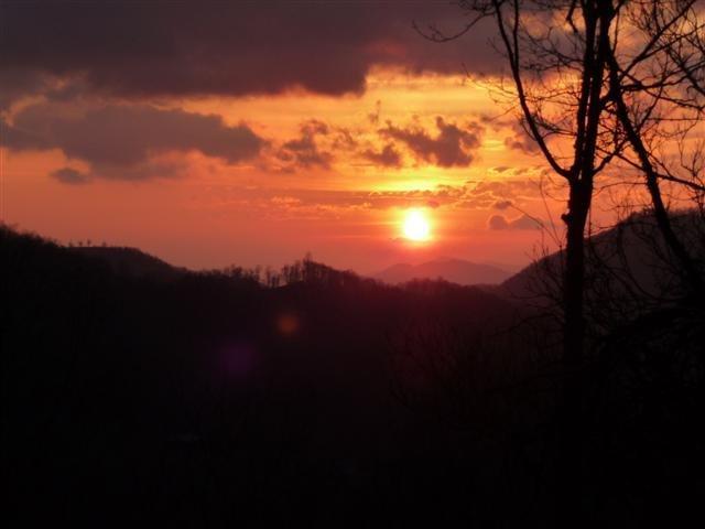 Bearadise at Sundown