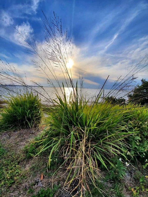 Fin del día mirando desde Dunedin, FL a través de la hierba Frackahatie