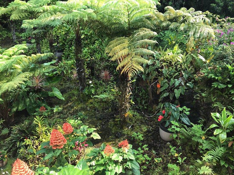 Jardines tropicales debajo del lanai