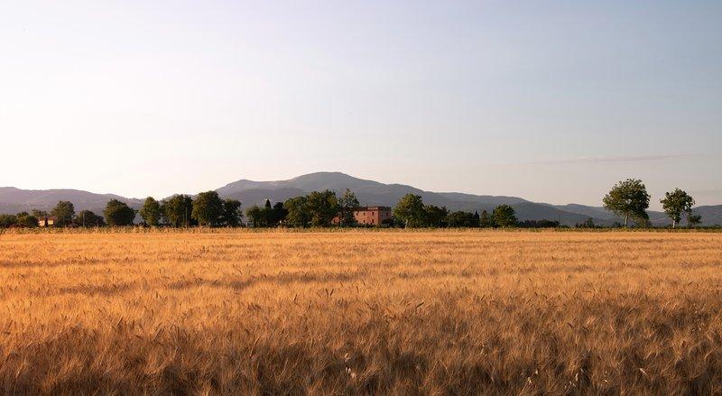 Girasole - Azienda agricola Il Pescinone sulla Costa degli Etruschi, holiday rental in Riotorto