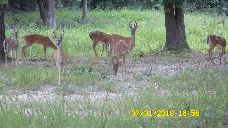 A couple of bucks hanging out for dinner.