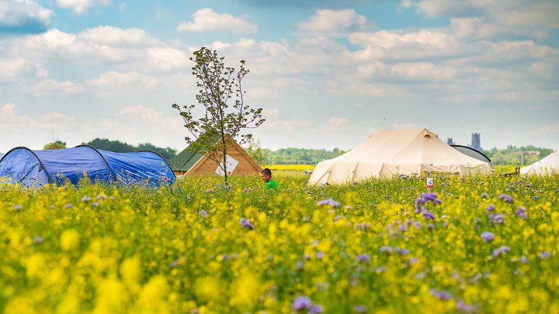 Mad Hatters Campsite & Glamping King of Hearts, location de vacances à Littleport