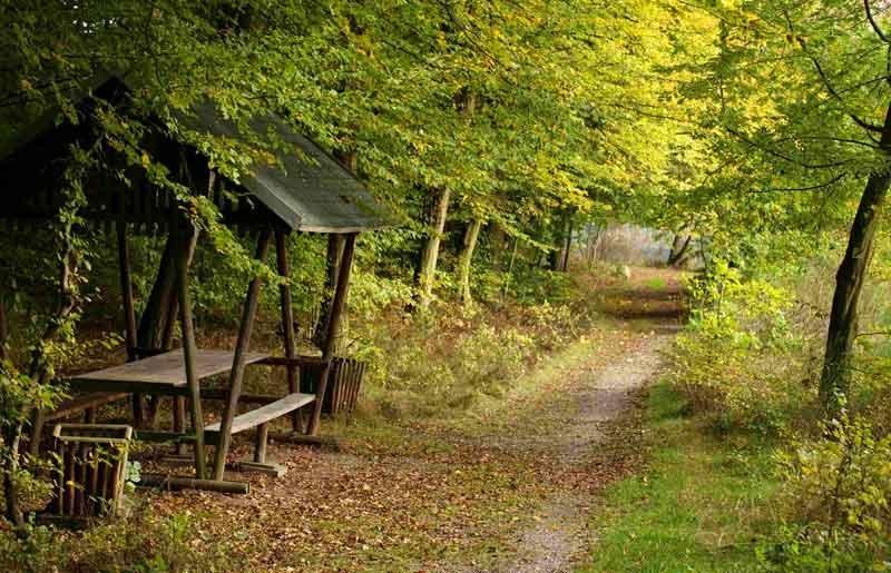 Rundwanderweg See - Ferienhaus Hachemühle - Dübener Heide