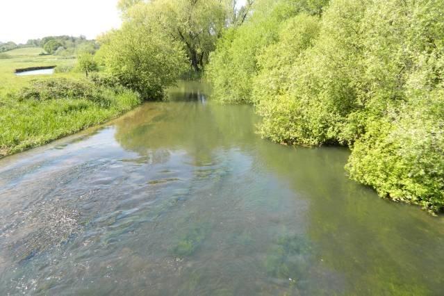 River Frome (50 meter från River Cottage)