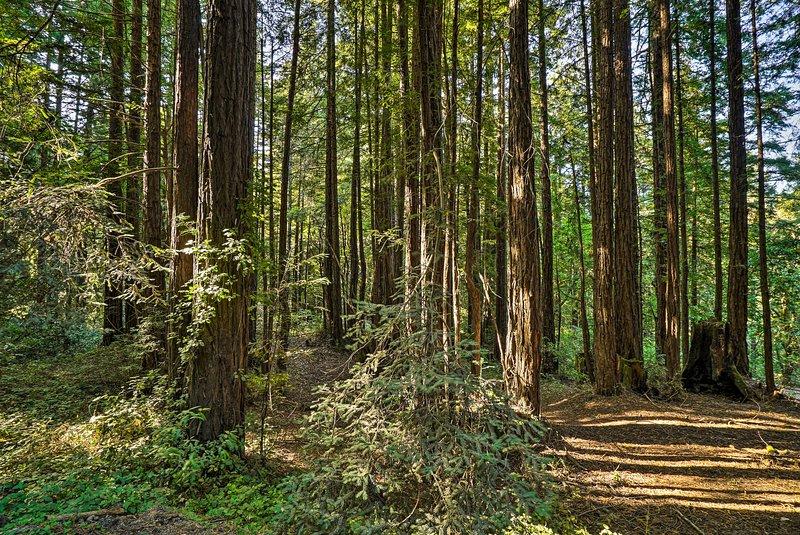 Fai una gita di un giorno alle sequoie vicine.