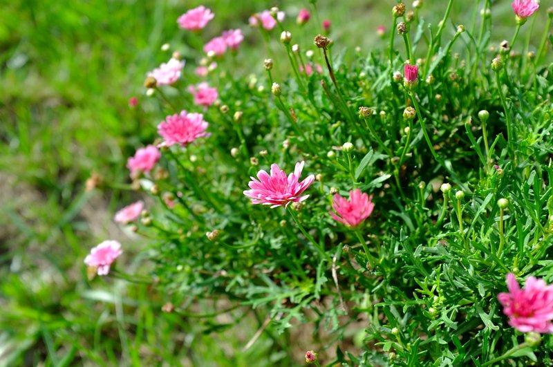 Casa Oliveira Esmeraldo Flowers
