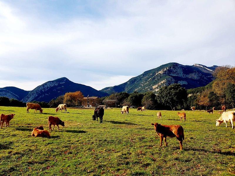 La Plana: casa rural a 6km de Sadernes, Girona., Ferienwohnung in Tortella