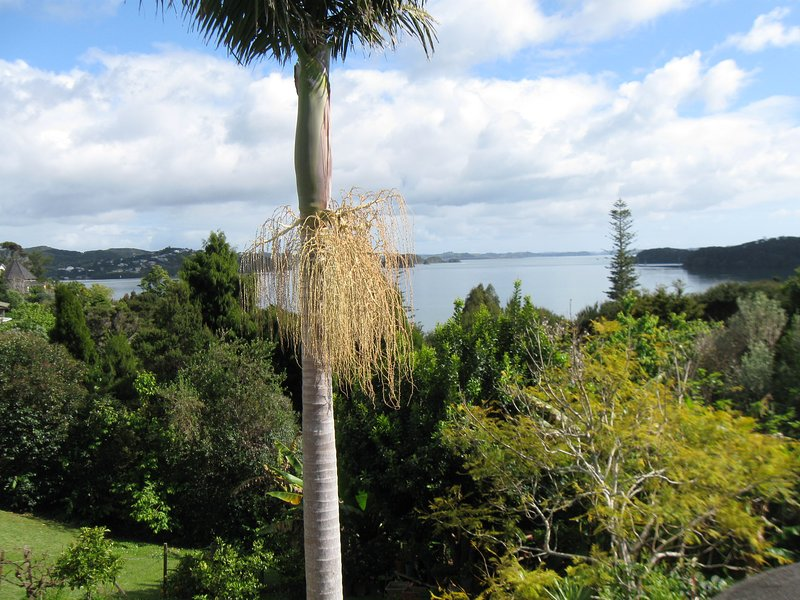 view from Aimeo Huahine