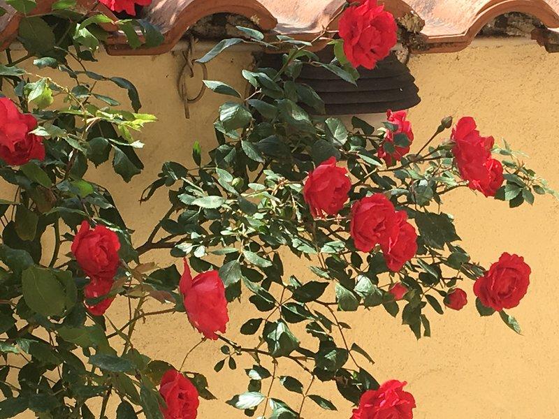 LENA'S HOUSE, holiday rental in Santa Maria delle Mole