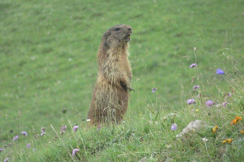 trekking meetings, marmot