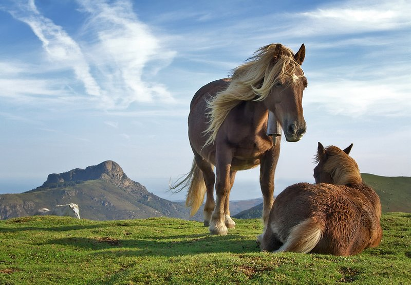 go meet the wild horses Potok ...