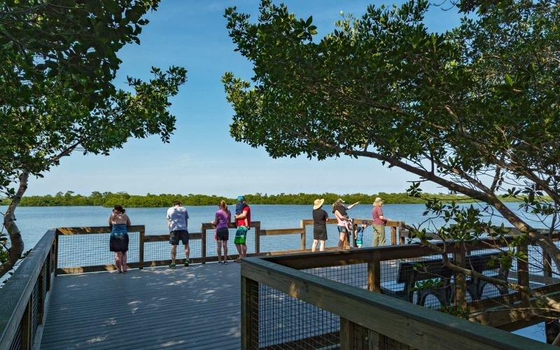 Observation de la faune sur le golfe et la baie de l'île