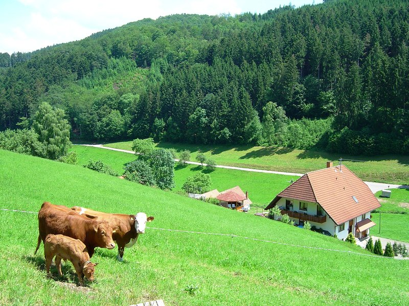 A three person holiday home on a delightful farm in a tranquil location., location de vacances à Schweighausen