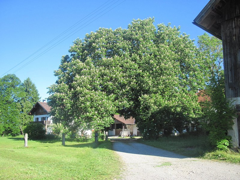Holiday in a farmhouse - animals, lawn and much more, holiday rental in Rottenbuch