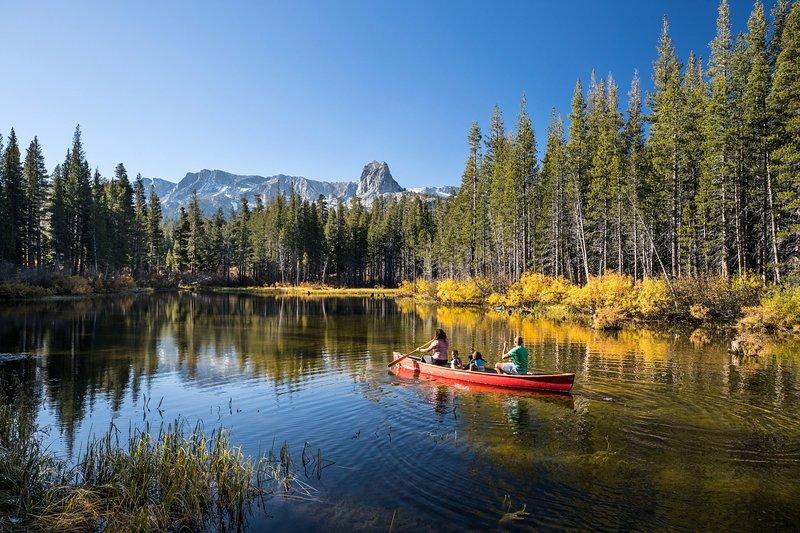 Baum, Wasser, Tanne, Ruderboot, Boot