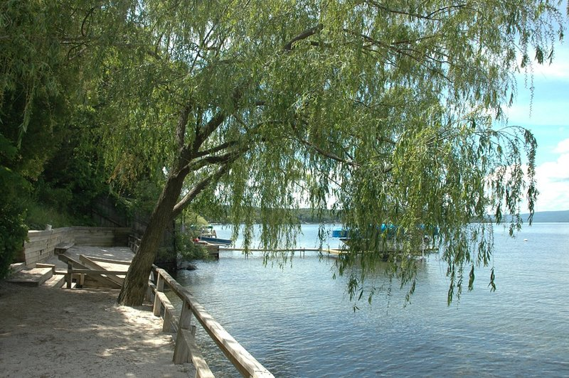 Tree,Furniture,Bench,Outdoors,Water