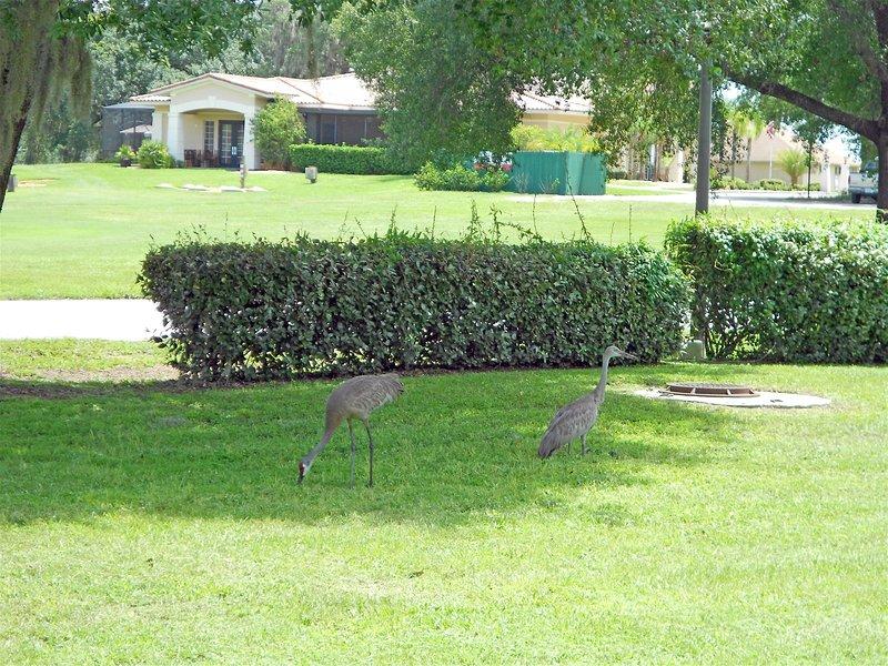 Grass,Lawn,Outdoors,Park