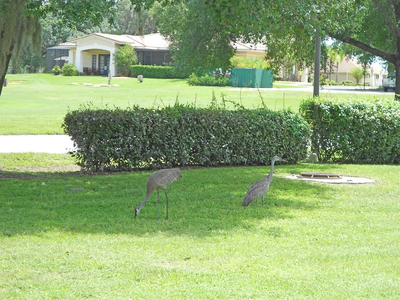 Grass,Lawn,Outdoors