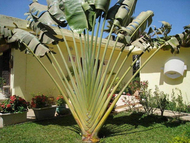 Studio in Tropical Garden, aluguéis de temporada em Pointe des Almadies