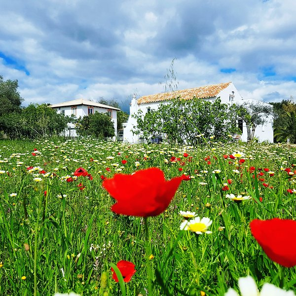 Cochichos Farm Country Houses - Amendoa House (Duplex), holiday rental in Pechao