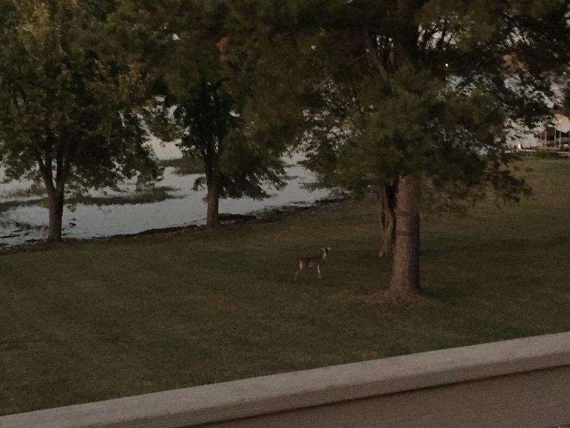 ciervos y otros animales salvajes en el patio trasero