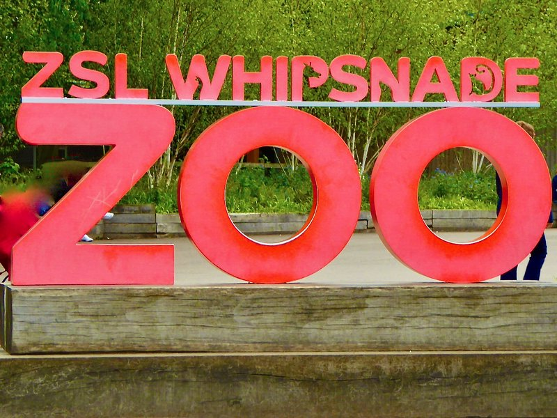 Across the road, Whipsnade Zoo!