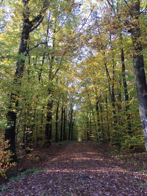 La belle forêt de Charnie pour les promenades et le cyclisme.