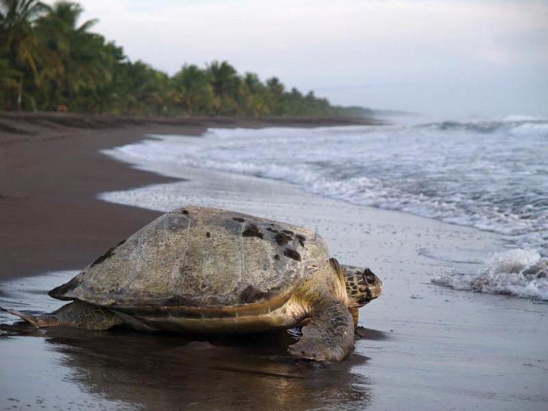 Turtle tour adventures