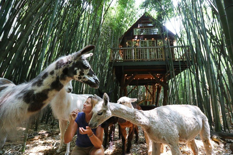 Atlanta Alpaca Treehouse in the Bamboo Forest, holiday rental in Conley