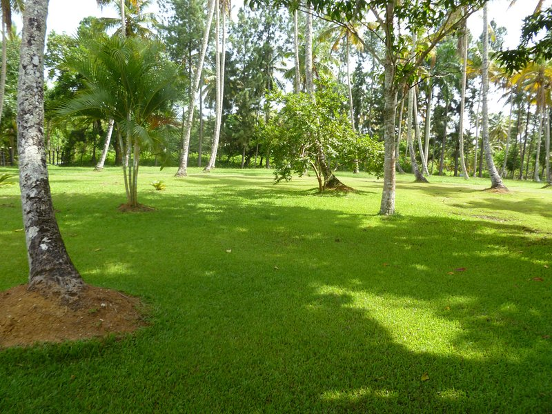 Tha place to Enjoy Life, holiday rental in Los Robalos