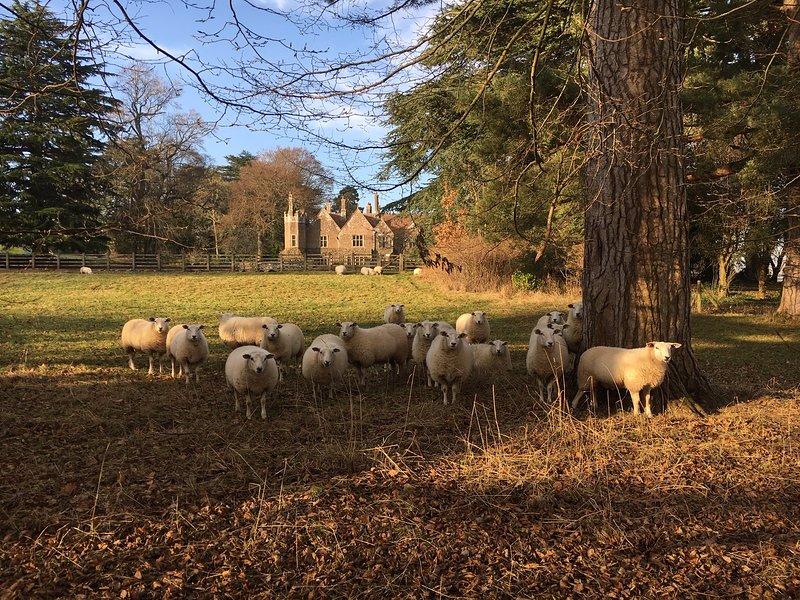 Vista a la casa Treberfydd desde el paddock en invierno