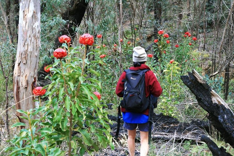 There are so many wonderful bushwalks around the Blue Mountains right on your doorstep.