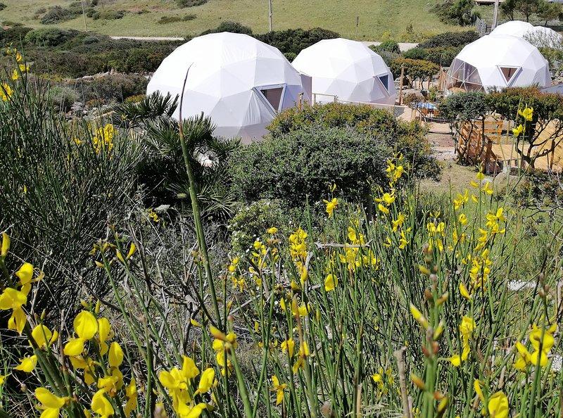 grupo de cúpulas geodésicas