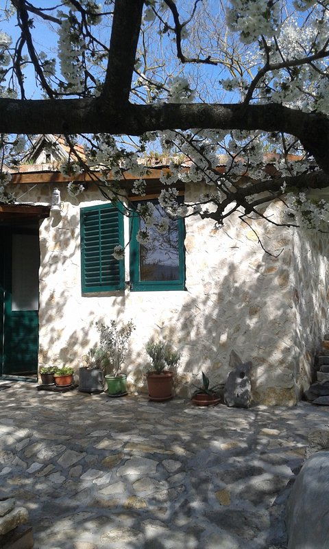 """""""Um jardim secreto"""" :) Uma casa velha, pequena e pedregosa."""