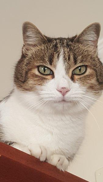 "Onze mascotte de kat ""MACCHIA"""