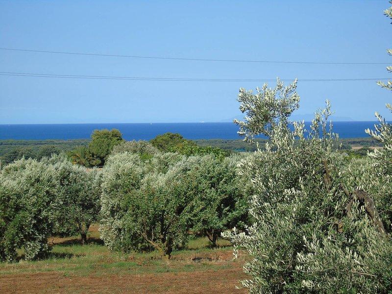 On Holiday Between Sky And Sea geco Di Campiglia, holiday rental in Campiglia Marittima