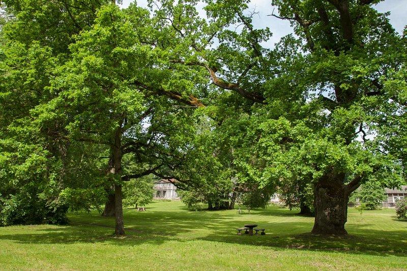 The Great oak tree apartments, casa vacanza a Tervete