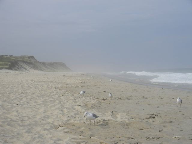 Cape Cod National Seashore is a short drive from Town-Home. Brewster's Bay side water is warmer!!