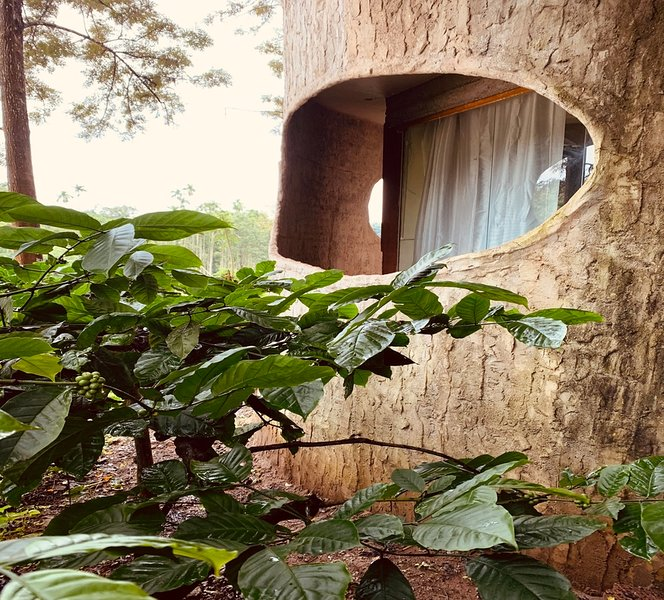 Rustic Charm Wayanad - The Stump, casa vacanza a Thirunelly