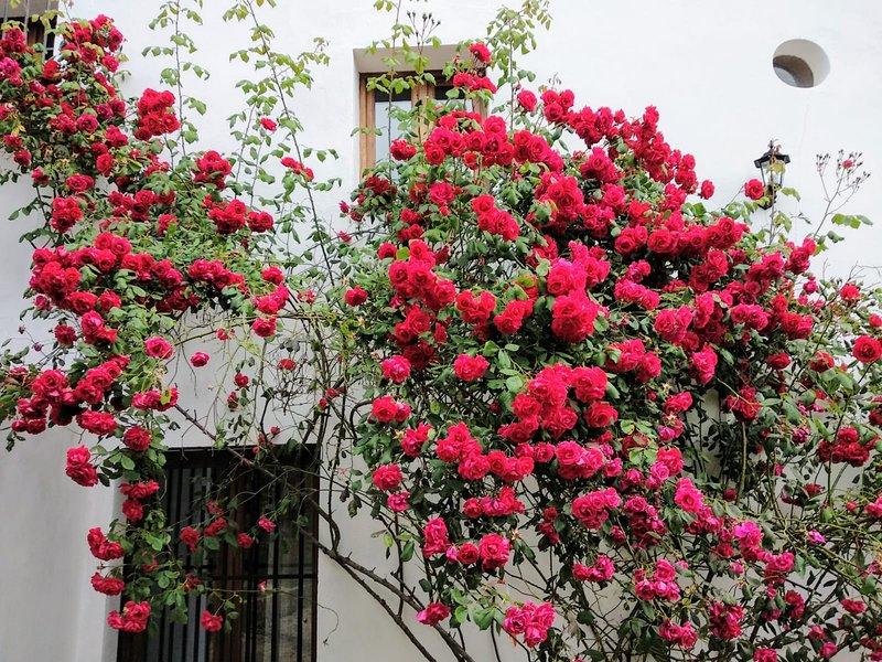 Casa Onuba, preciosa casa para 9 personas con chimenea y amplios espacios, location de vacances à Alajar