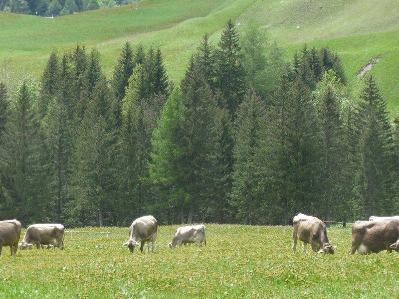 Vista Medel, casa vacanza a Vals