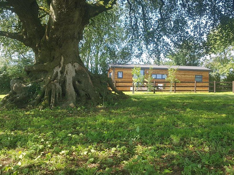 Beech Tree Lodge, Whitstone, vacation rental in Brazzacott