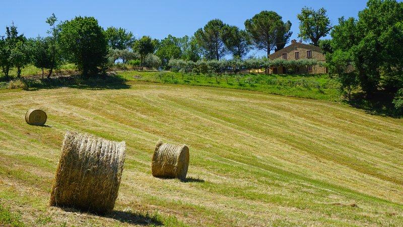 Un luogo di pace in campagna con piscina, Ferienwohnung in Borgiano di Serrapetrona