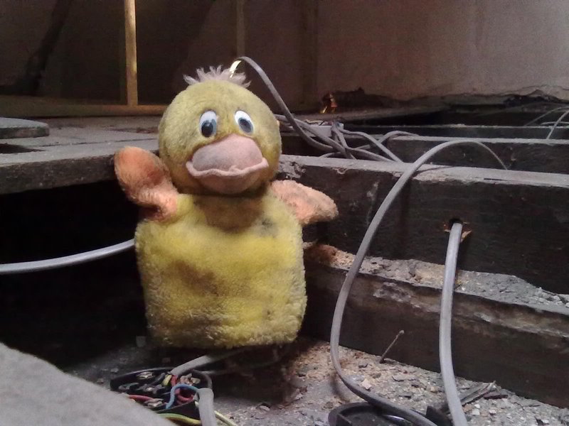Daffy was discovered trapped in a wall cavity during the refurbishment and went on to ably assist!